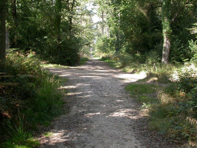 Broadley Inclosure, track junction