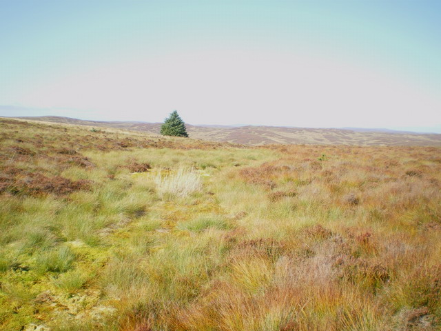 Boggy patch on the ridge from Hen Gerrig