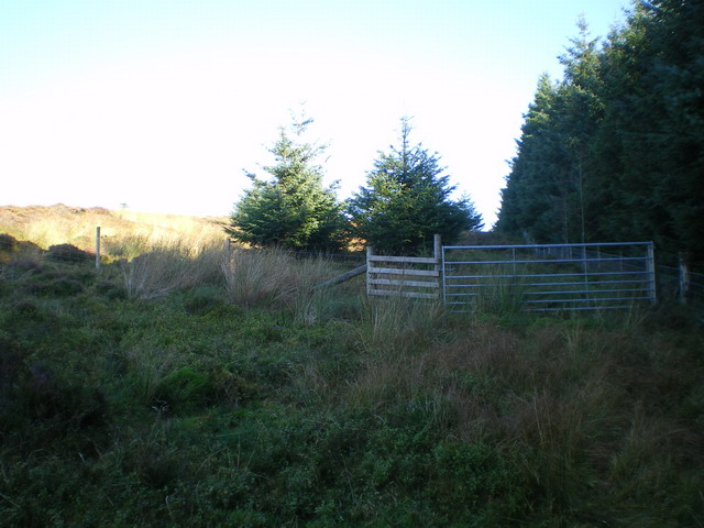 New gateway & fence