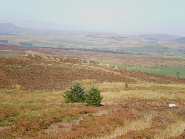 Moorland on Pen y Ffridd Cownwy