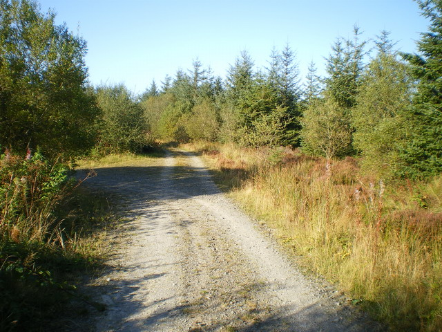 Track junction in the Dyfnant Forest