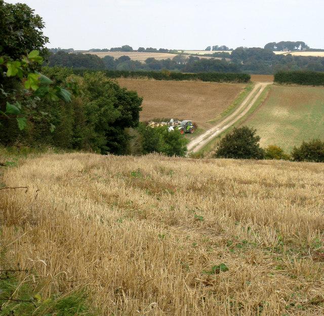 Hallington, farm track