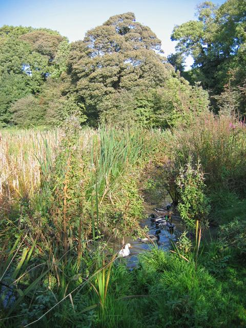 Over Kellet Pond