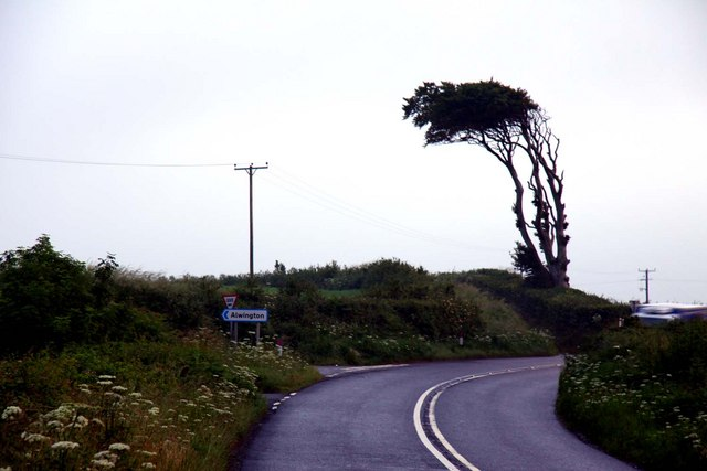 A windswept tree near Spanny Hone