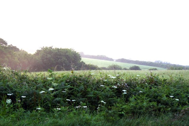 Hedge and fields near Spanny Hone