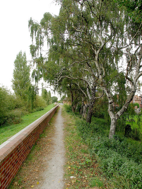 Riverside Silver Birches