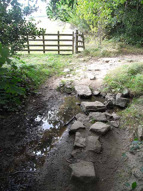 Stepping stones in Dukeshouse Wood