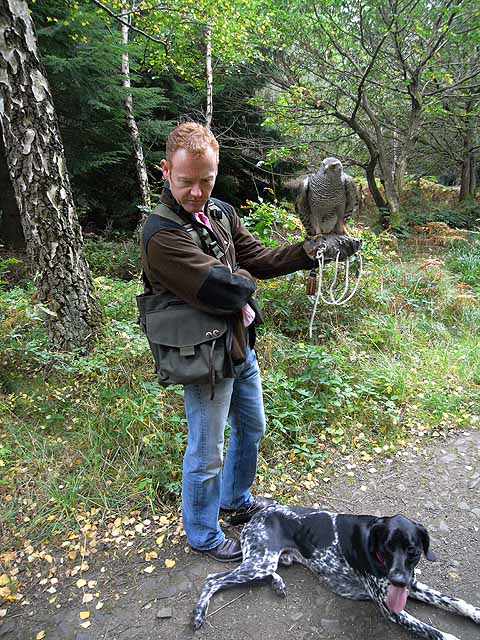Falconer with goshawk