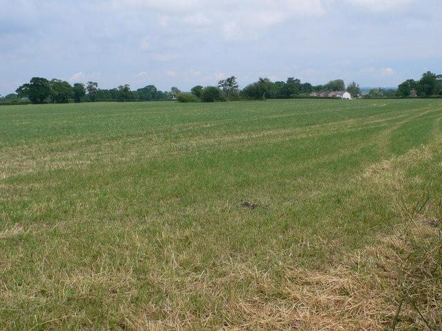 Grassland, Burton Green