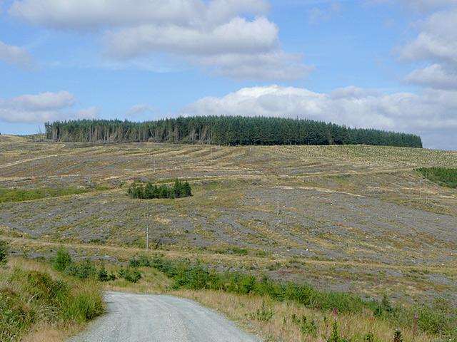 Tywi Forest clearance, Esgair Cloddiad, Powys