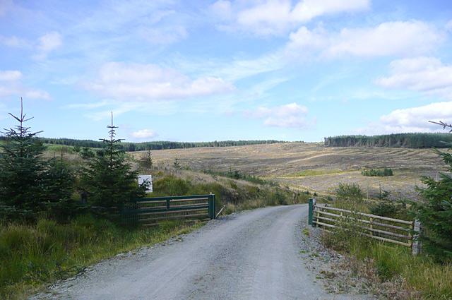 Road into the Tywi Forest, across Nant y Cloddiad, Powys