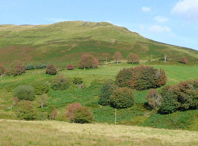 Hillside with rowans, Powys