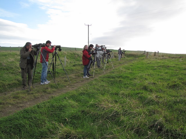 """Twitchers"" at Windwick."