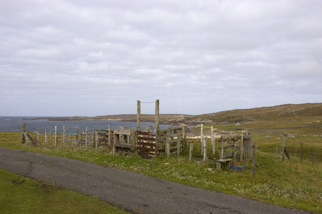 Sheep Fank at Mealasta