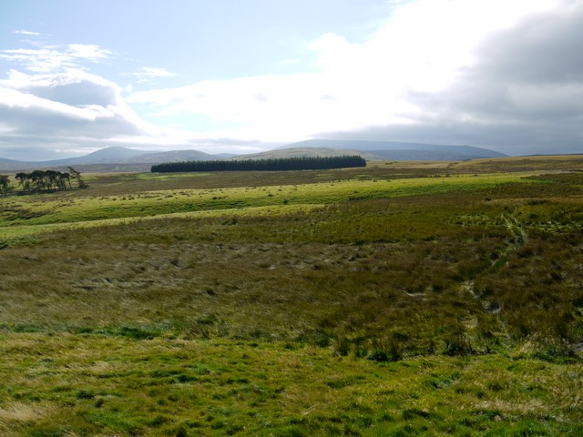 Rough grazing with a view of Cheviot