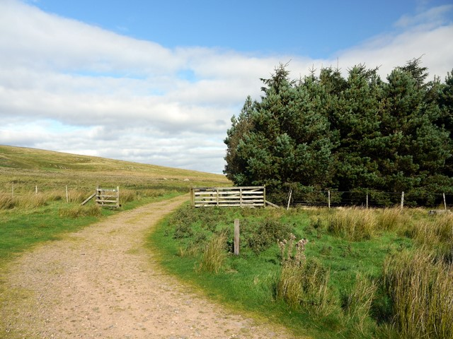 Track north-east of Commonburn House