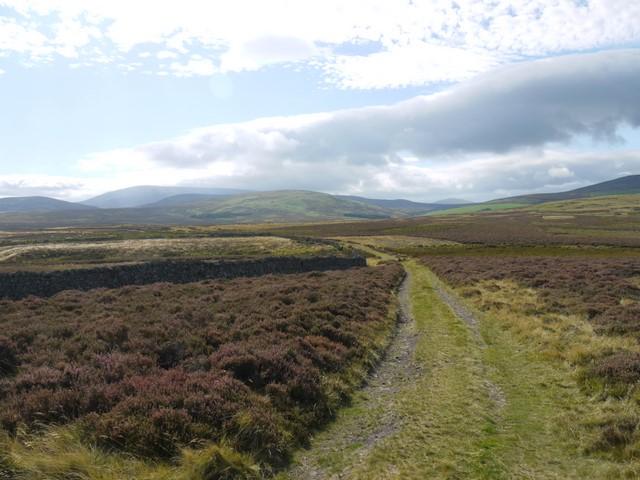 Track near St Cuthbert's Way