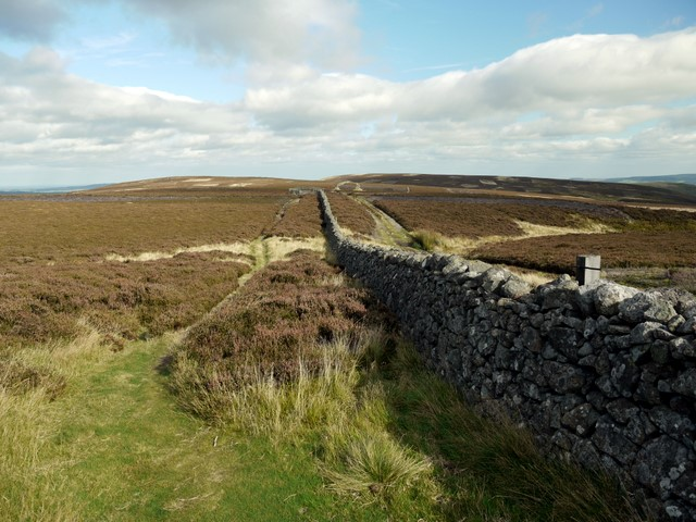 Wall by St Cuthbert's Way over Black Law