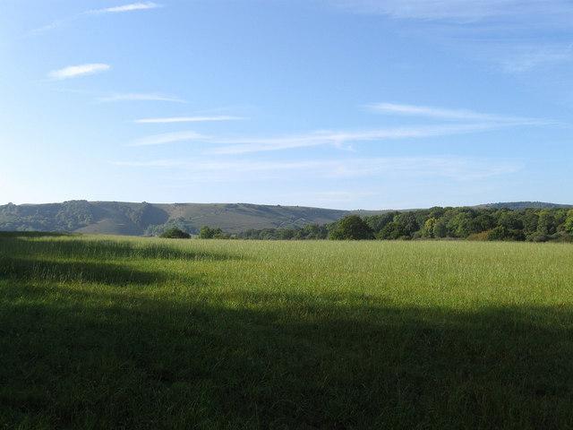 Woods Field