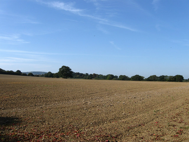 Six Acres Near Ashurst