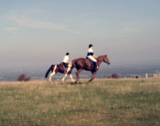 Horses on the gallop