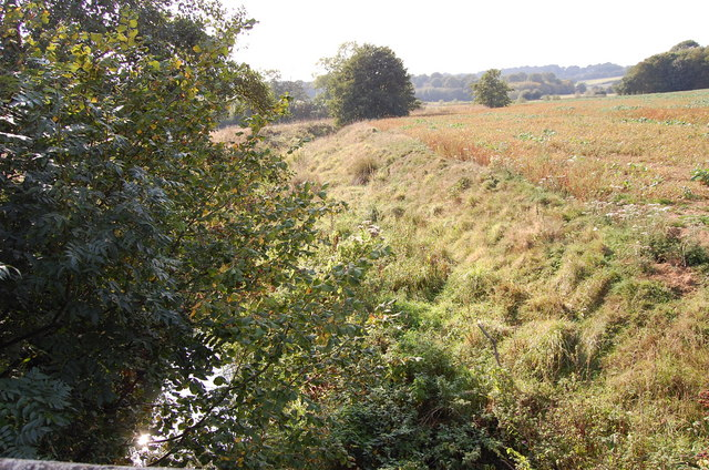 Overgrown River Tillingham from Hundredhouse Bridge