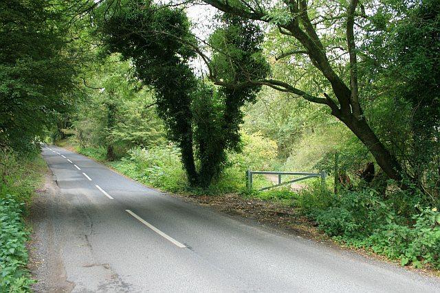 White Down Road: Abinger Roughs