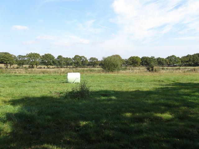 Lower Wood Field