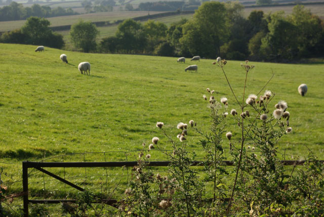 Farmland near Ufton