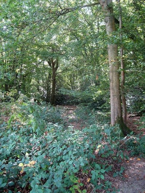 Ridden's Wood