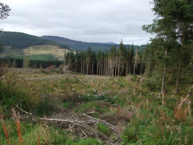 Forest clearance - Gwydir Forest Penmachno (1)