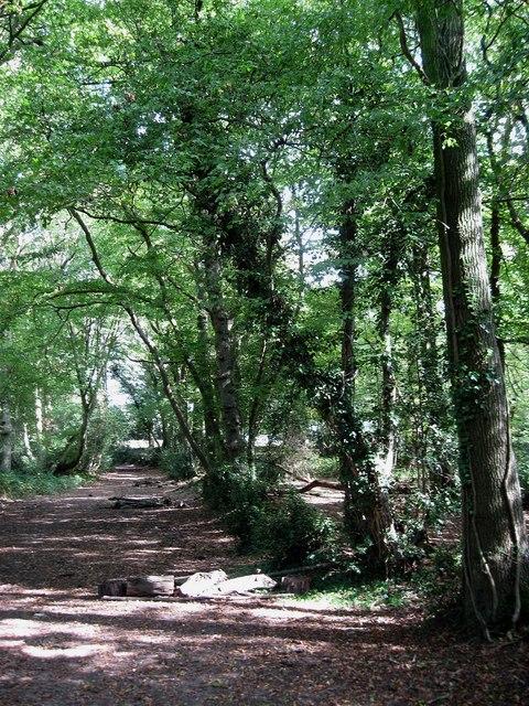 Bridleway, Sandpit Wood