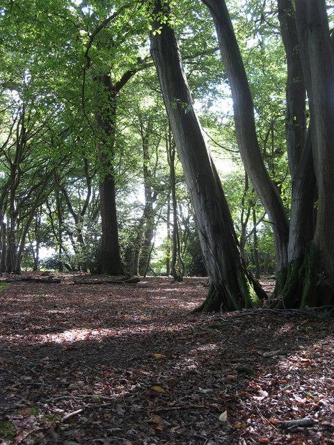 Sandpit Wood