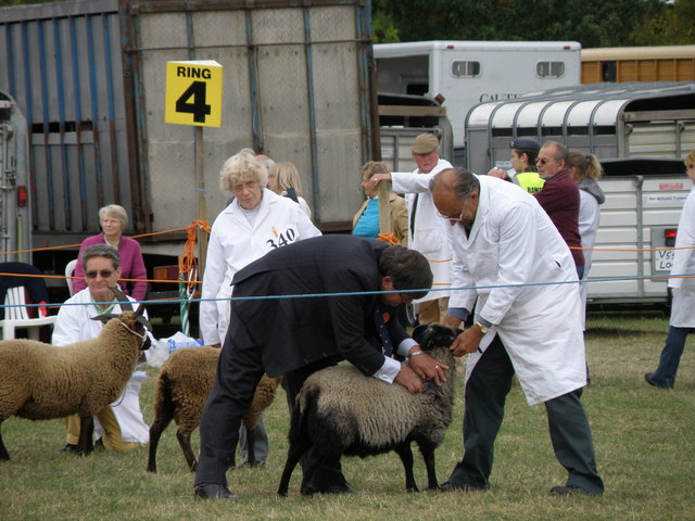 Judging Sheep, Great Gransden