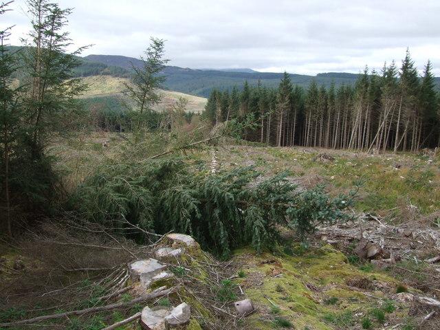 Forest clearance - Gwydir Forest Penmachno (2)