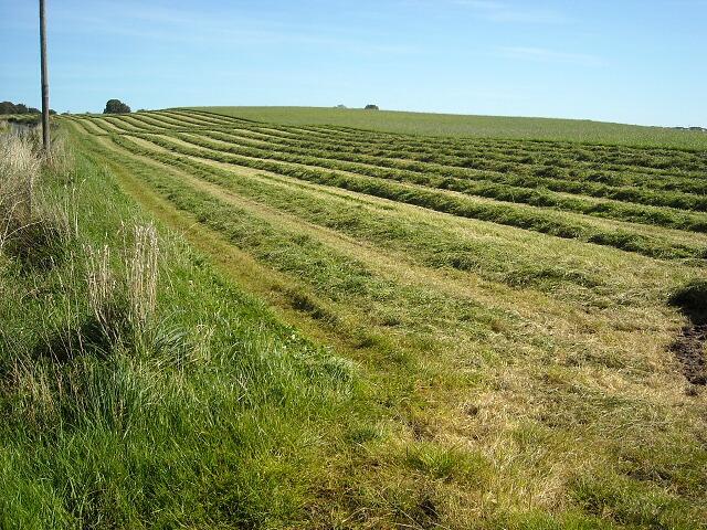 Grass Cutting Near Whitelaw Farm