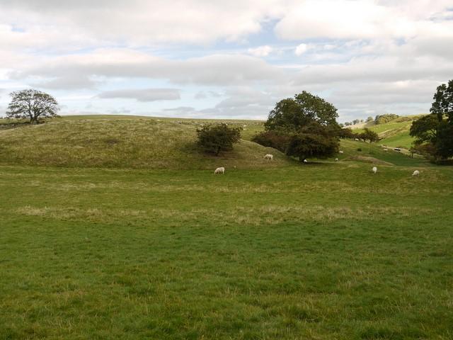 Sheep pasture south of Humbleton