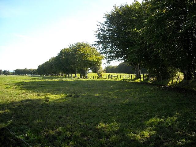Fields Near Brackenridge