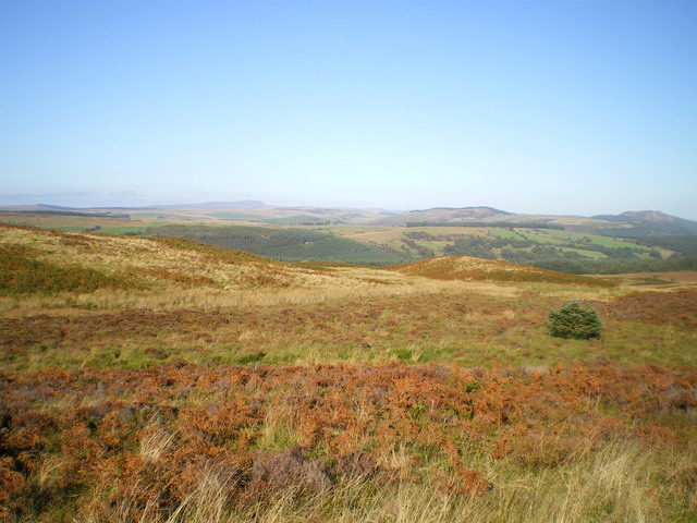 Heather and bracken moor on Pantiau