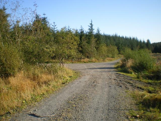Track junction near Ffridd y Garnedd