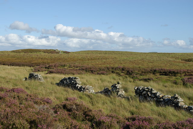 Drystane dyke & heather moorland south of Mid Hill