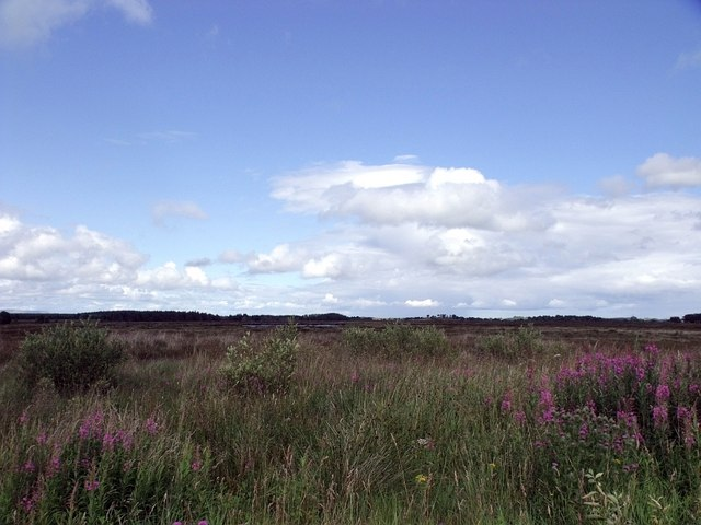 Eastern part of Fannyside Muir