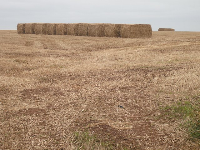 A line up of square bales, Kinaldie