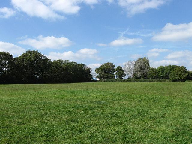 Little Wood Field