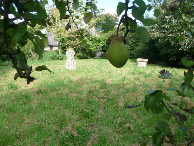 Compton Abbas: a pear and a pair of gravestones