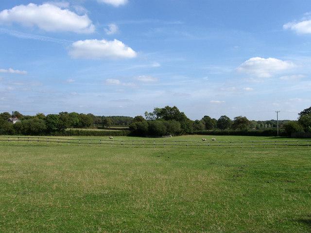 Birch Field