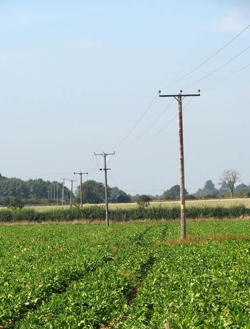 Electricity poles in sugar beet crop