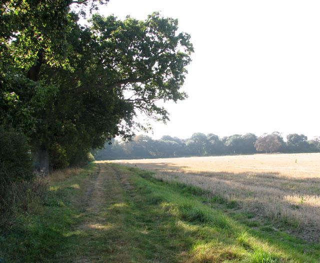Path skirting woodland edge