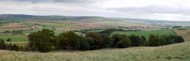 Harehope Plantation above Bendor