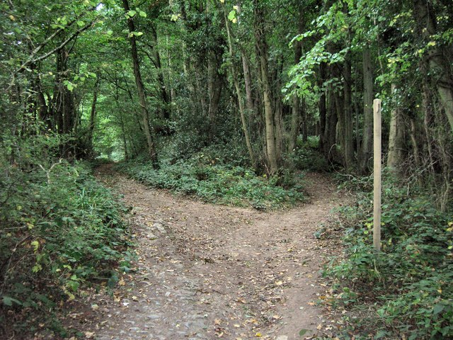 Path Junction in Caswell Wood